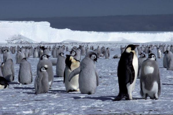 «Αποστολή: Παγωμένη Ανταρκτική» | imommy.gr
