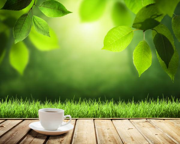 Το τσάι του βουνού | imommy.gr