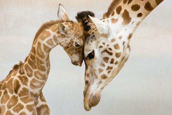 Η μητρότητα στο ζωικό βασίλειο | imommy.gr
