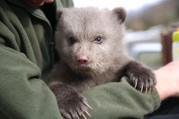 H iSquare υποστηρίζει την ανατροφή του Πάτρικ, της ορφανής μικρής αρκούδας του ΑΡΚΤΟΥΡΟΥ | imommy.gr
