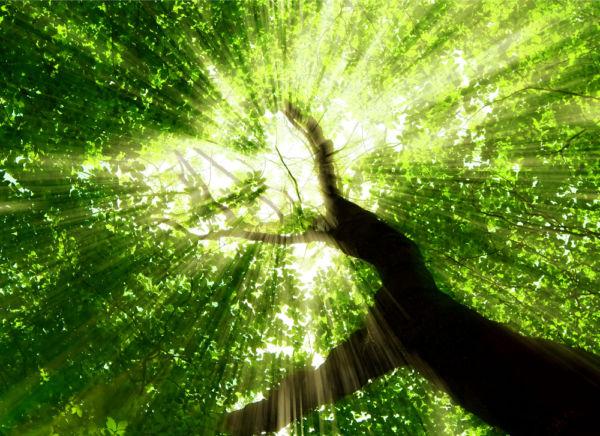 Το πράσινο μας κάνει ευτυχισμένους | imommy.gr