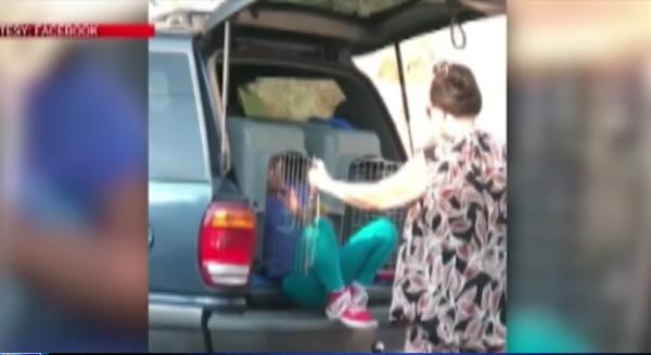 Σοκαριστικό βίντεο: Γυναίκα οδηγεί με τα εγγόνια της σε κλουβιά μεταφοράς ζώων | imommy.gr