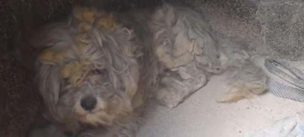 Βγήκε ζωντανός σκύλος από φούρνο στο Μάτι! | imommy.gr