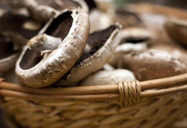 Μανιτάρια πορτομπέλο: Η ιδανική επιλογή για τη δίαιτά σας | imommy.gr