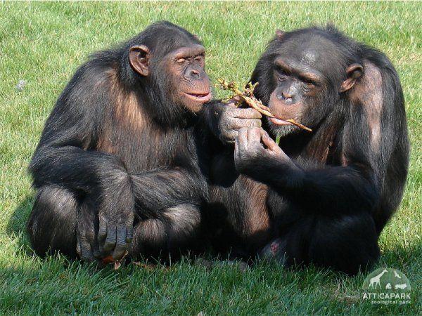 «Αττικό Ζωολογικό Πάρκο» | imommy.gr