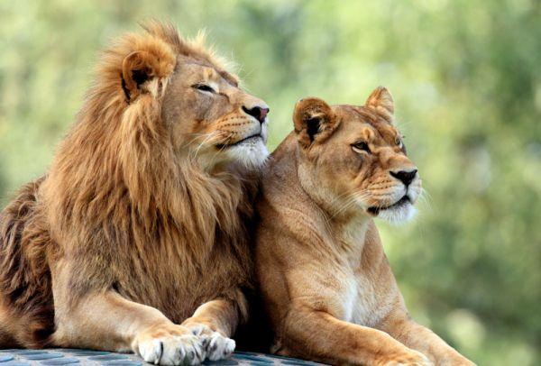 Αρέσει στα λιοντάρια το βιολί; | imommy.gr