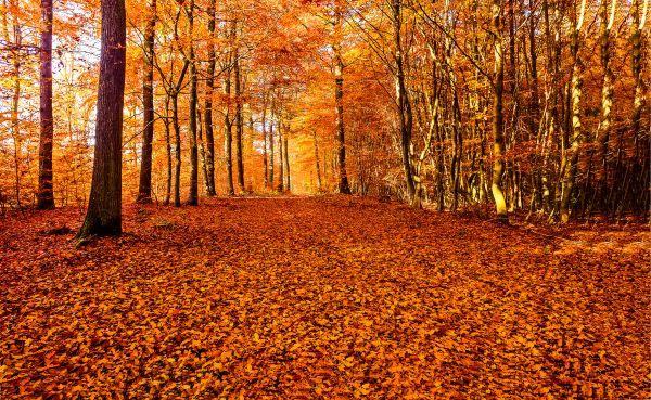 Φθινόπωρο: Πέντε λόγοι που είναι η αγαπημένη μας εποχή | imommy.gr