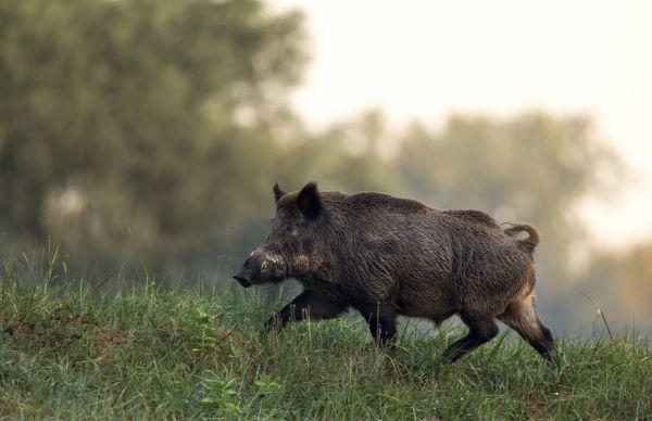 Προσοχή: Εμφανίστηκαν αγριογούρουνα σε περιοχή της Αττικής | imommy.gr