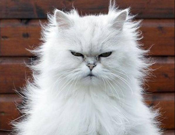 Ποια ζώδια μπορούν να σε «τρελάνουν» | imommy.gr