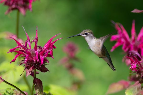 Δείτε το πιο μικρό πτηνό του κόσμου | imommy.gr