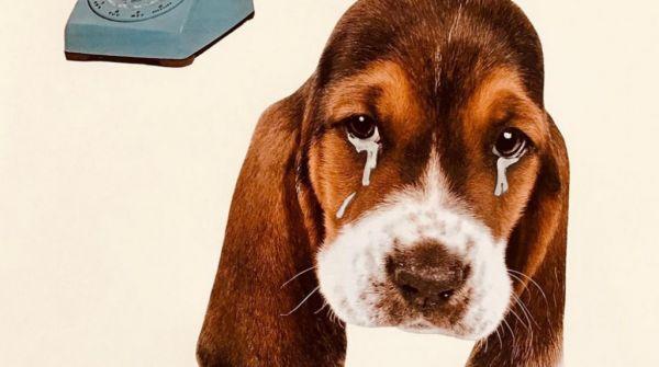 Όταν τα ζώδια κλαίνε | imommy.gr