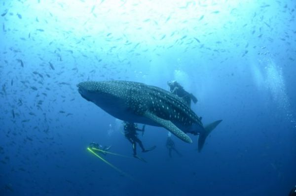 Ο απίστευτος τρόπος με τον οποίο σώθηκε από επίθεση καρχαρία   imommy.gr