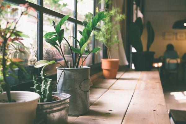 Έτσι θα φροντίσετε τα φυτά εσωτερικού χώρου | imommy.gr