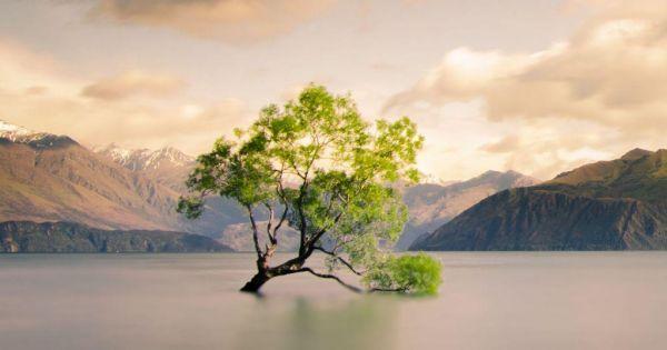That Wanaka tree: Βανδάλισαν την πιο αναγνωρίσιμη ιτιά του κόσμου | imommy.gr