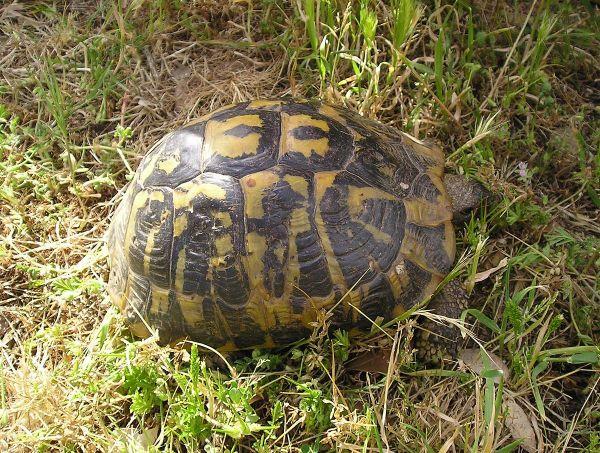 «Έφαγε» πρόστιμο επειδή έβγαλε βόλτα τη… χελώνα της   imommy.gr