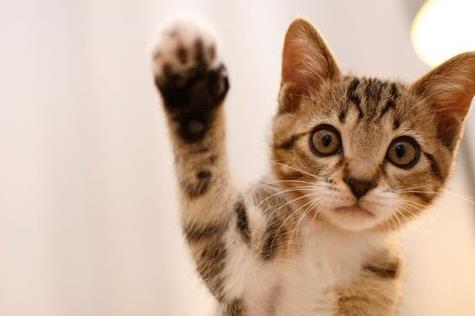 Έρευνα : Οι γάτες μπορεί να μολυνθούν και να μεταδώσουν τον κοροναϊό | imommy.gr