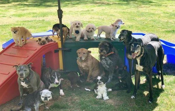 Ζευγάρι έδωσε μια περιουσία για να μετατρέψει το σπίτι του σε «παράδεισο» για ηλικιωμένα σκυλιά | imommy.gr