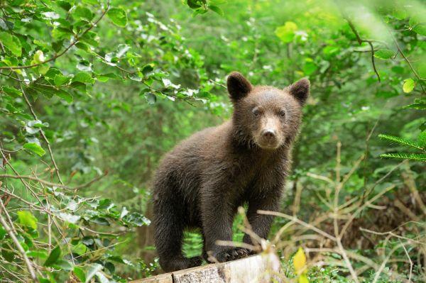 Κοζάνη: Αρκουδάκι μπήκε σε αυλή σπιτιού – Τι έκανε ο σκύλος | imommy.gr