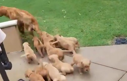 Πολύ γέλιο: Σκυλίτσα αποφεύγει τα πεινασμένα κουτάβια της | imommy.gr