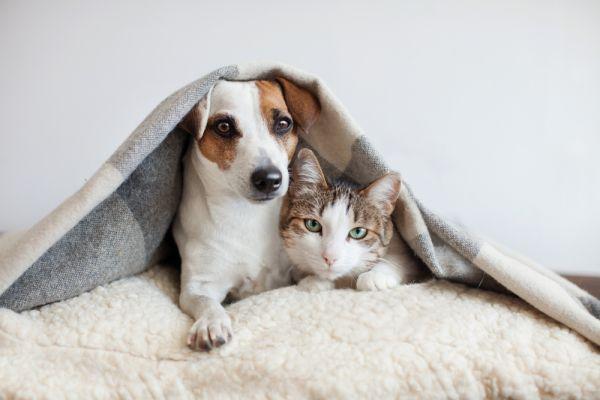 Οι άνθρωποι μεταδίδουν τον κοροναϊό στις γάτες και τους σκύλους, σύμφωνα με νέα μελέτη | imommy.gr