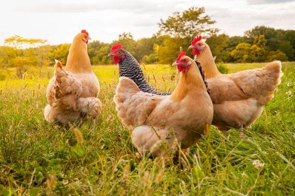 Εν μέσω κοροναϊού, η ΕΕ προειδοποιεί και για γρίπη των πτηνών | imommy.gr