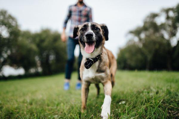 Πώς οι σκύλοι μπορούν να βοηθήσουν στον έλεγχο της πανδημίας | imommy.gr