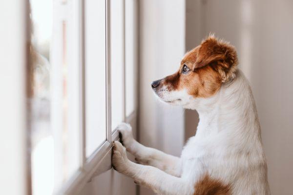 Νοσοκομείο «προσλαμβάνει» σκύλο για να φτιάχνει τη διάθεση των εργαζομένων | imommy.gr