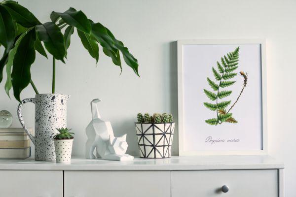 Έρευνα: Τα φυτά στο σπίτι ενισχύουν την ψυχολογία των ανθρώπων στο lockdown   imommy.gr