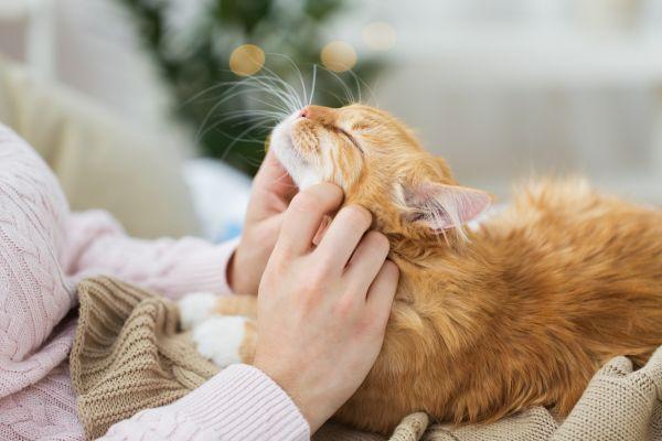Γάτες: Είναι δυνατόν να κολλήσουν κοροναϊό; | imommy.gr