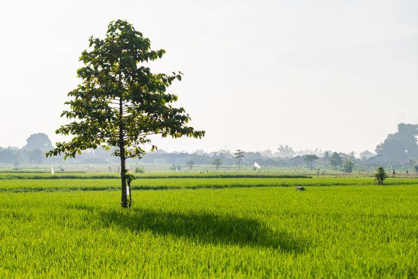Μήνας γέννησης: Μάθε ποιο δέντρο ταιριάζει στο δικό σου | imommy.gr