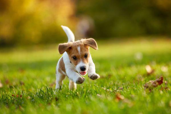 Μικροσκοπικό σκυλάκι γίνεται viral για το ταλέντο του στο… τραμπολίνο [βίντεο]   imommy.gr