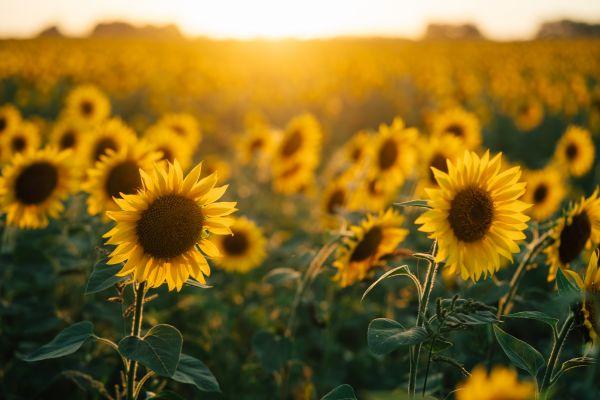 Θερινό Ηλιοστάσιο: Πότε είναι η μεγαλύτερη μέρα του χρόνου | imommy.gr
