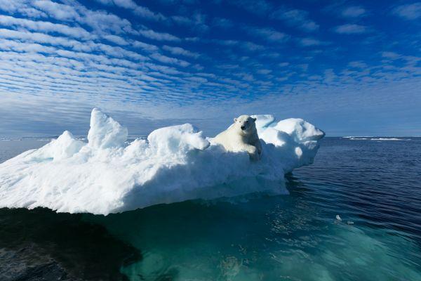 Κλιματική αλλαγή: Πώς συνδέεται το λιώσιμο των πάγων με τις πανδημίες; | imommy.gr