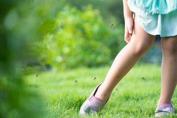 Γιατί τα κουνούπια τσιμπούν συγκεκριμένα άτομα;   imommy.gr