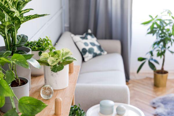 Ποια φυτά εσωτερικού χώρου να προτιμήσουμε; | imommy.gr